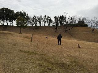 明徳公園2017/2/20 犬の散歩