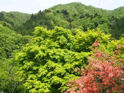 N_studiomimosa里山①