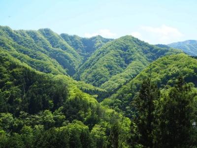N_studiomimosa里山②