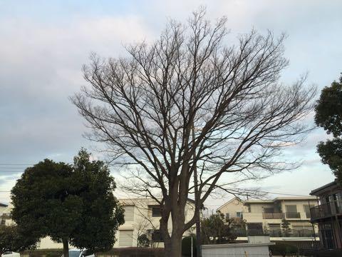 春の朝の空
