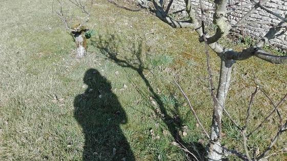 Spoy、田舎の春