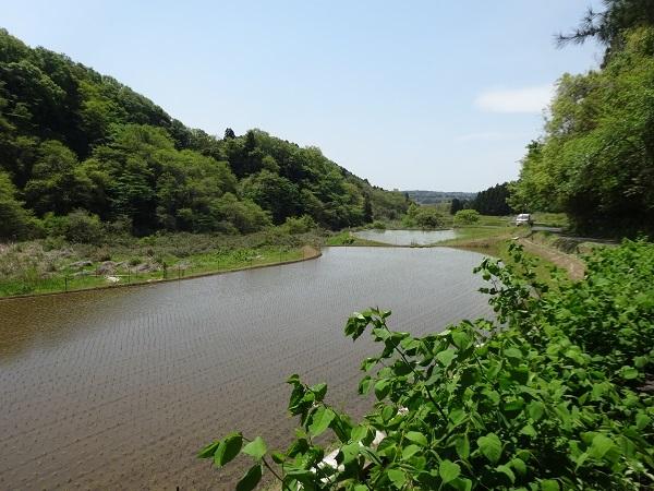 20170429高滝湖方面 (7)