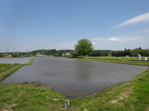 20170429高滝湖方面② (2)