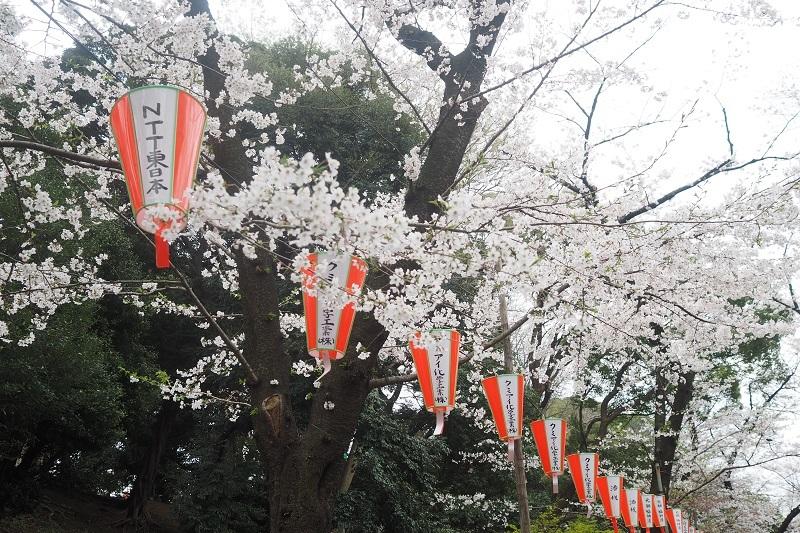 うえの桜祭り2