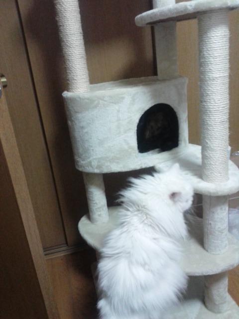 cattour2.jpg