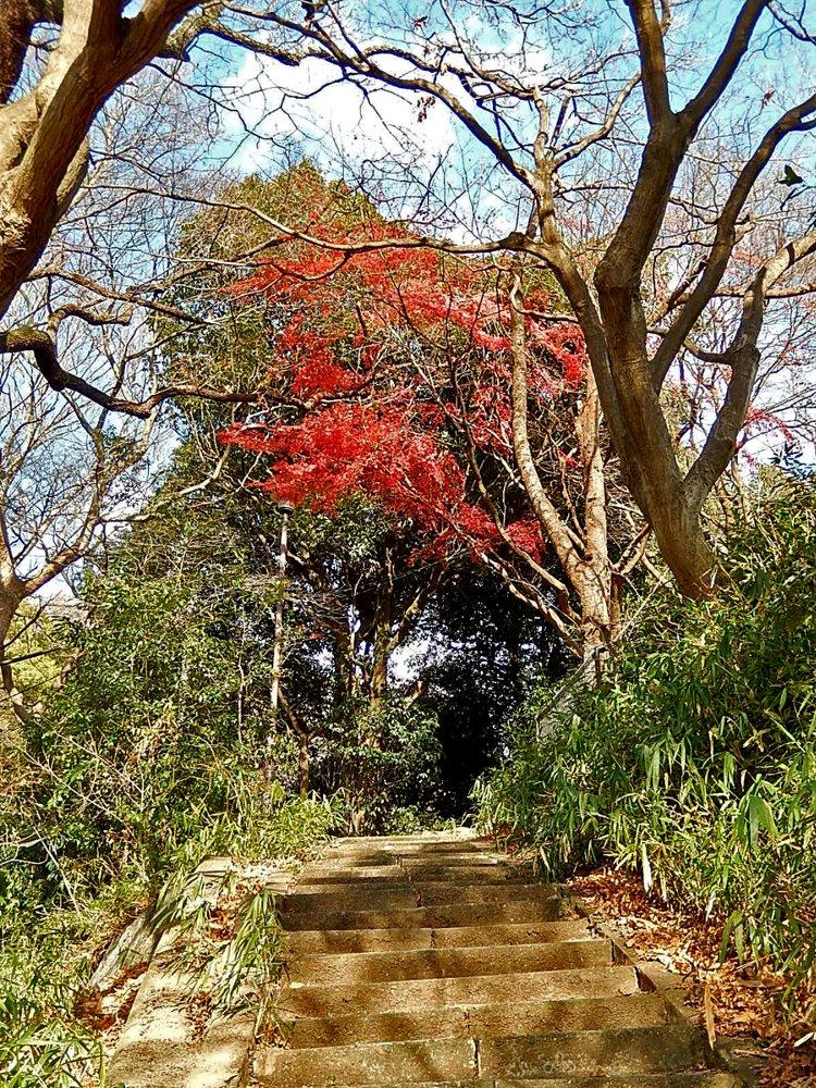 諏訪山の紅葉