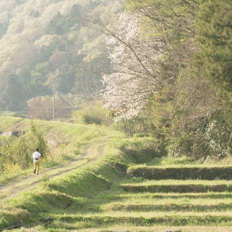 四十八瀬川・新緑3
