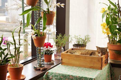 猫ピッピとランの花