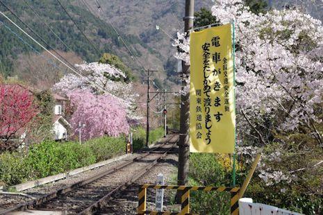 桜満開の踏切