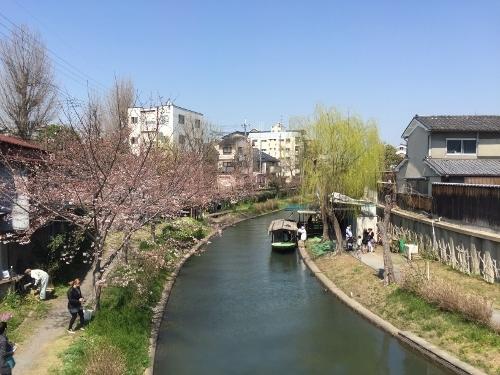 弁天橋からの桜 (1)