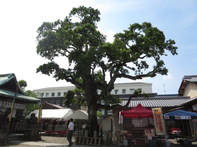 京都 伏見 ミナージュ 金札宮 神輿 祭 (7)