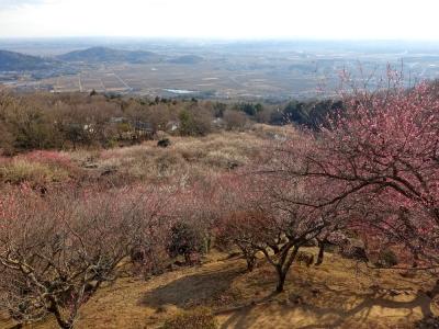 筑波山梅林から関東平野の眺望