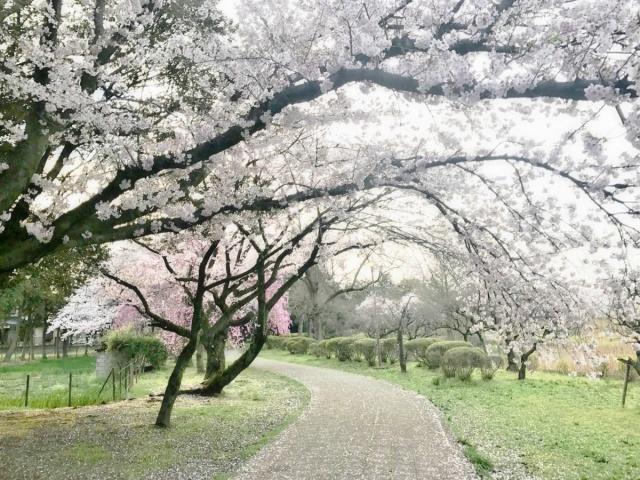 水城公園 (1)