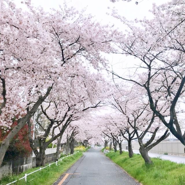 武蔵水路 (2)