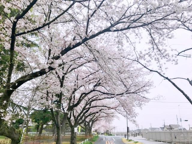 武蔵水路 (1)
