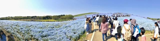 国営ひたち海浜公園 (6)