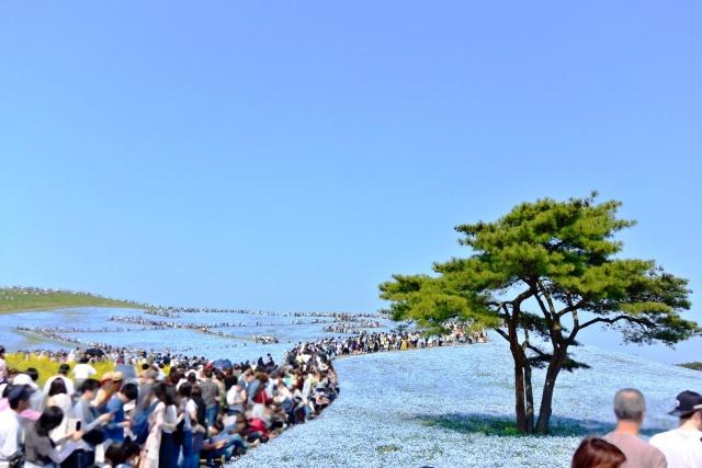 国営ひたち海浜公園 (8)