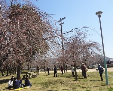 西田川公園2