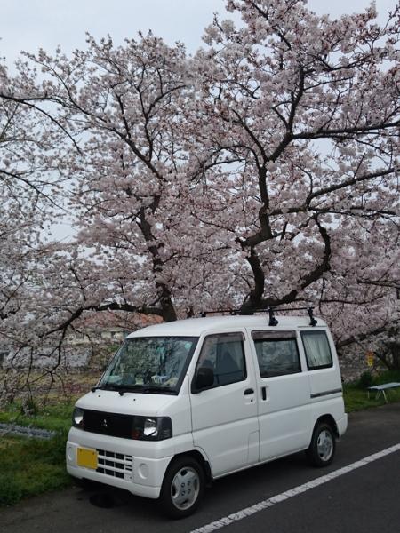 なんちゃって号と桜
