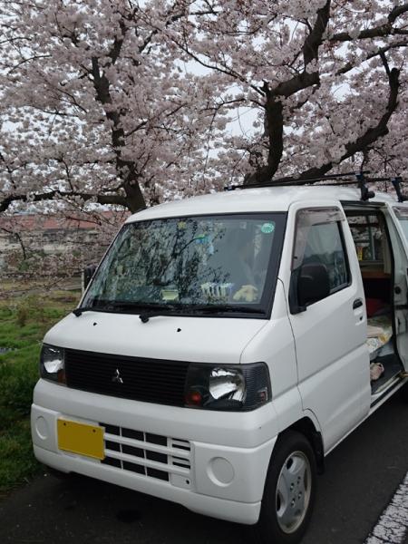 なんちゃって号と桜04