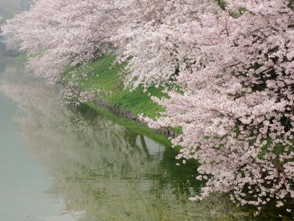 鎌田池06