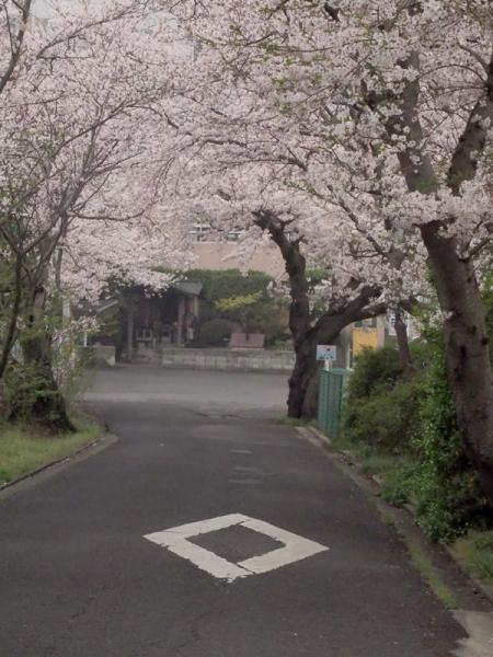 鎌田池08