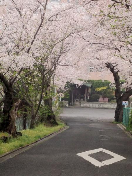 鎌田池09
