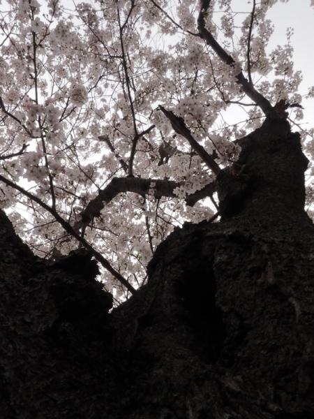 鎌田池11