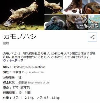 1703_カモノハシ