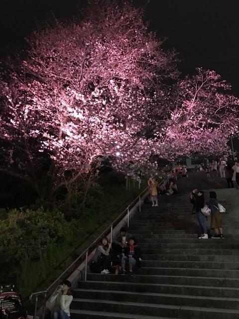 桜2017454