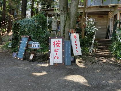 inogasakura2