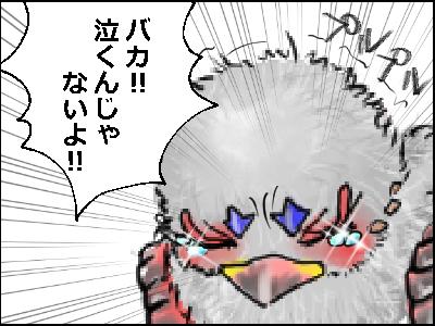 トリドひな4
