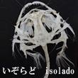 2017_いぞらどisolado_logo