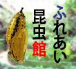 2017_ふれあい昆虫館_logo