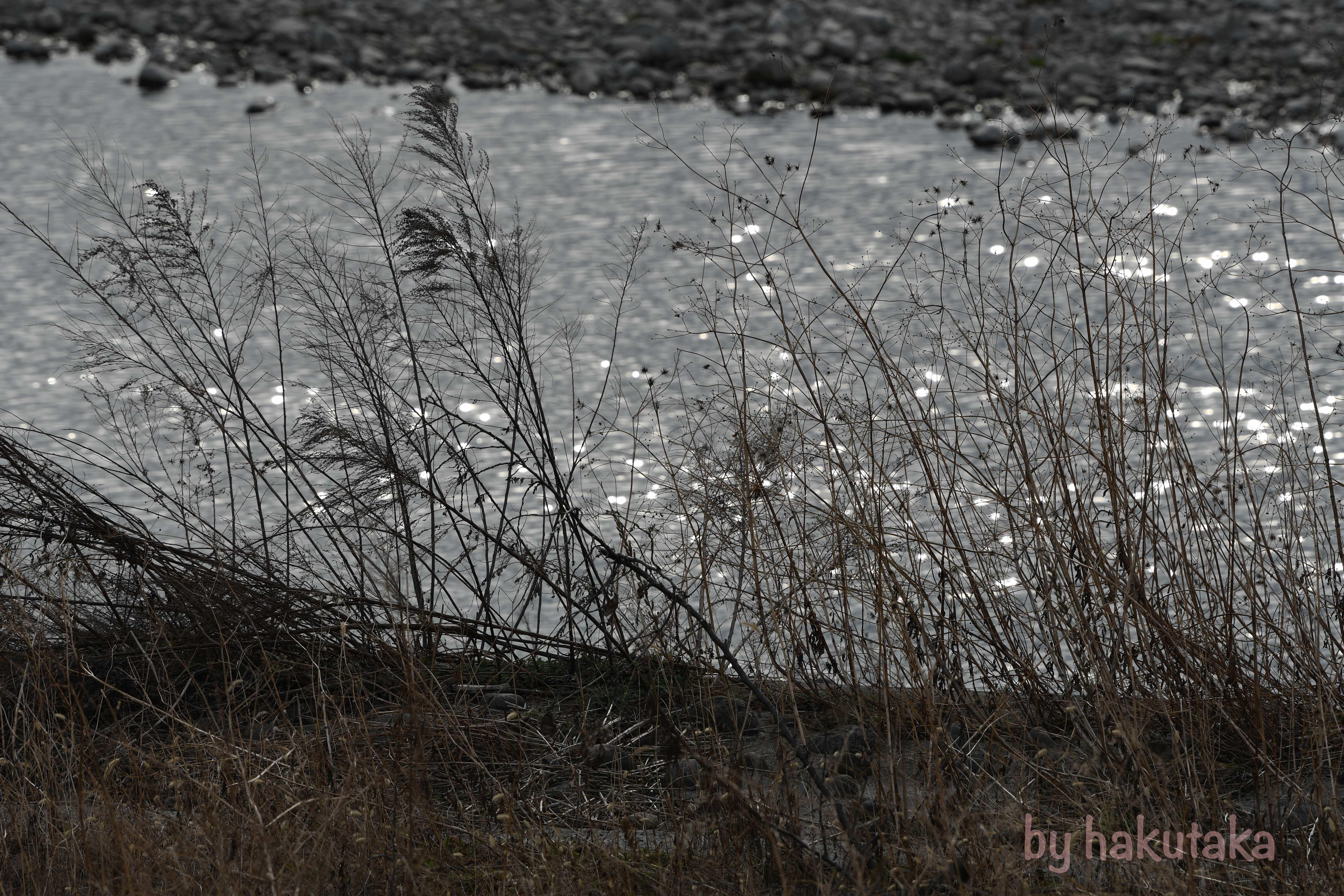 20170315-DSC_3652.jpg