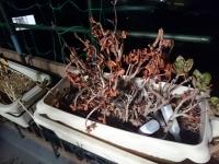狐巣 料理 もち AVIREX 植物
