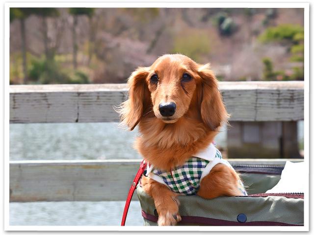 散策☆薬師池公園