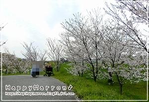 桜20171