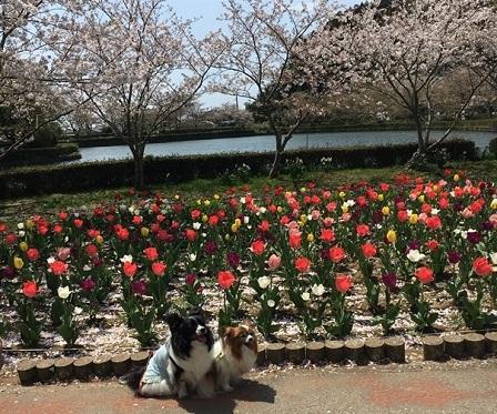 2017-04-15 袖ヶ浦公園にて