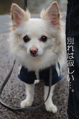 s-IMG_4536.jpg
