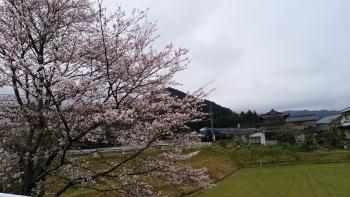 20170408桜と電車