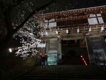 YOZAKURA2017042103.jpg