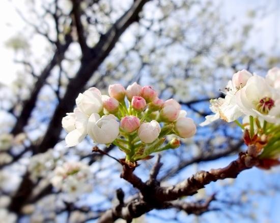FLOWER (550x439)