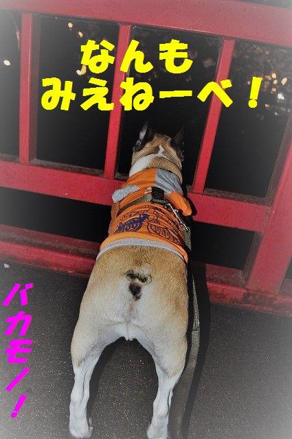 DSC_0039_2017041014252408f.jpg