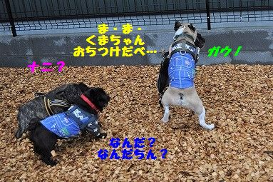 DSC_0064_2017041213195875a.jpg