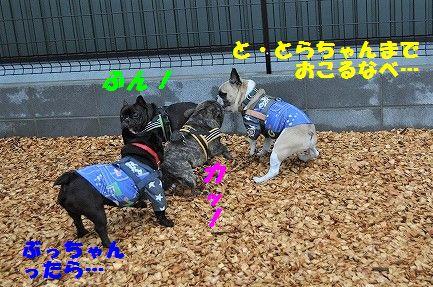 DSC_0065_2017041213195995d.jpg