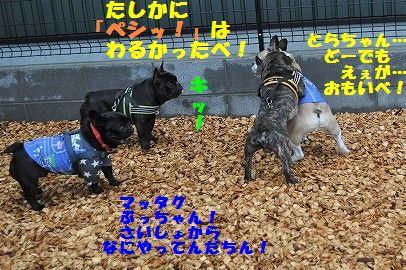 DSC_0066_20170412132001322.jpg