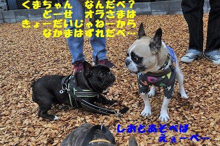 DSC_0070_2017041216093788d.jpg
