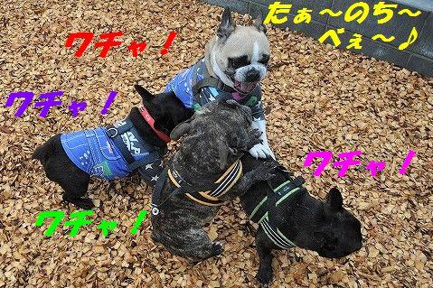 DSC_0103_20170412160941a43.jpg