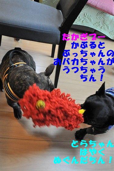 DSC_0137_20170419173738f17.jpg